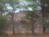 elefanten-im-singletrail