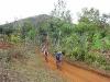 richtung-bananentschungel